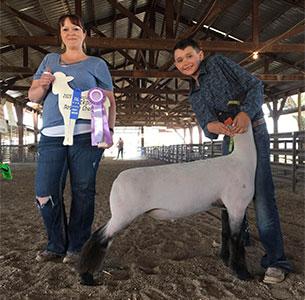 Triple D Club Lambs :: Winners